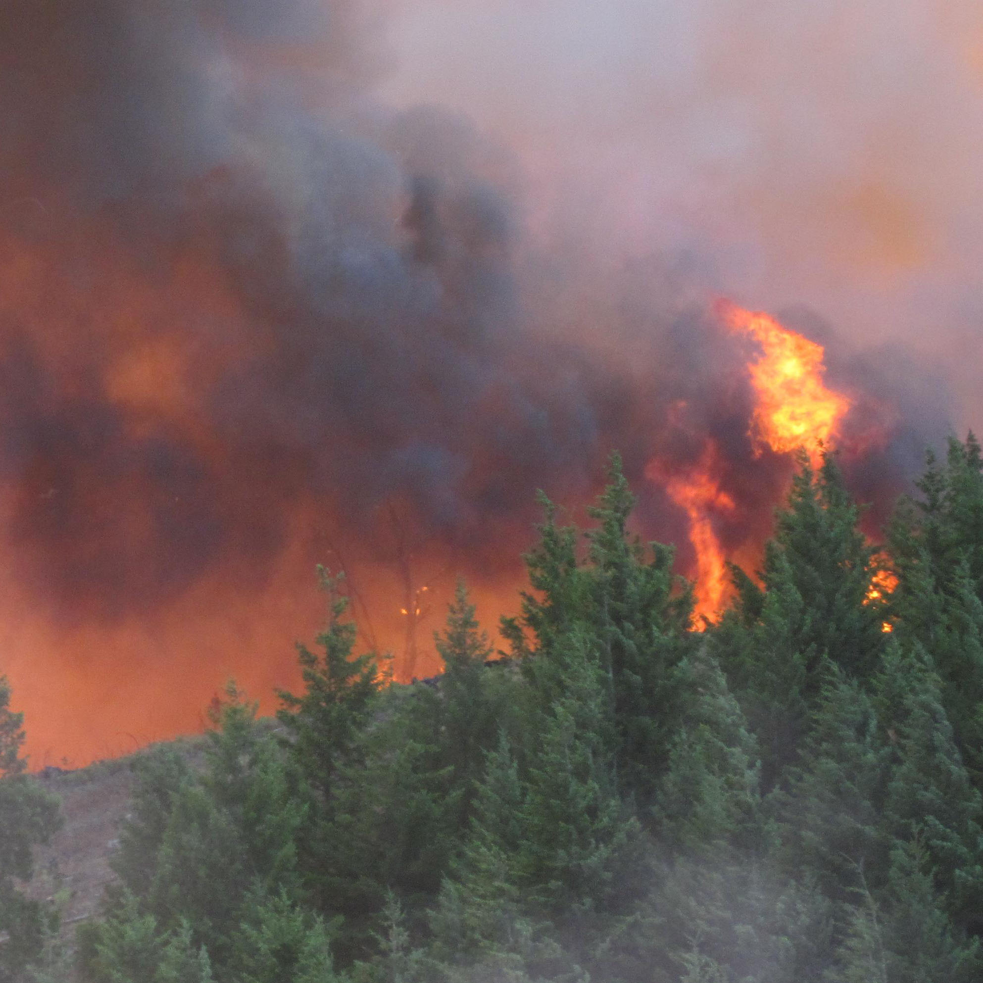 High Wildfire Severity Risk Seen In Young Plantation