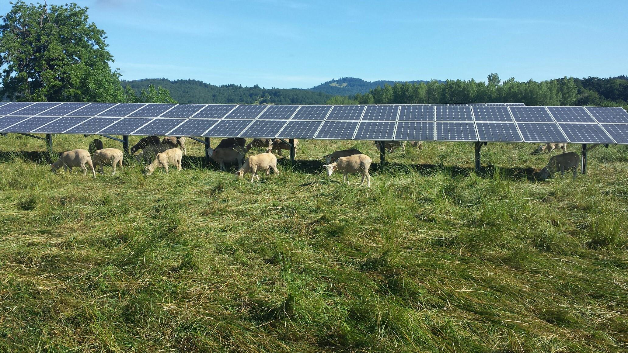 Painéis solares em terras agrícolas