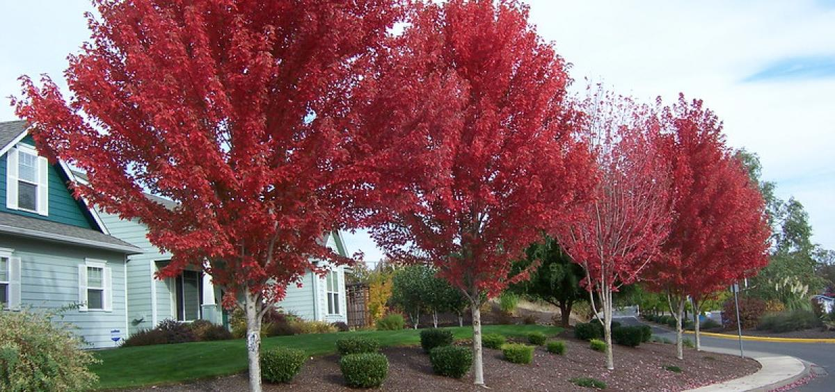 Trees in fall color. Photo by Neil Bell.