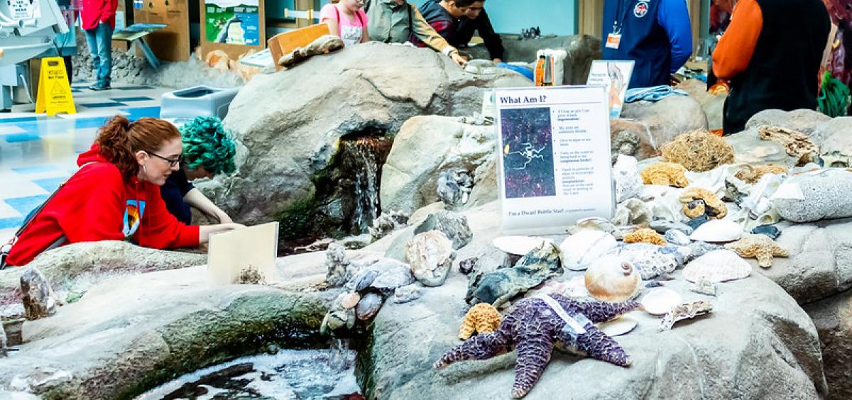 Image of a man made tidepool with people gathered around looking at sea stars and sea anemones.