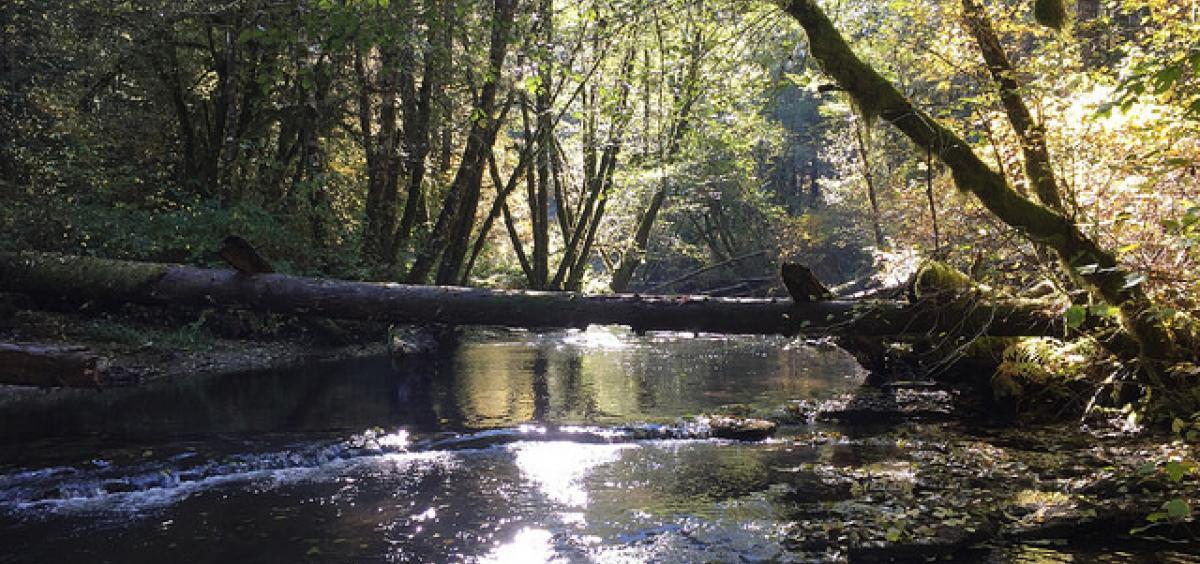Alsea River, Oregon