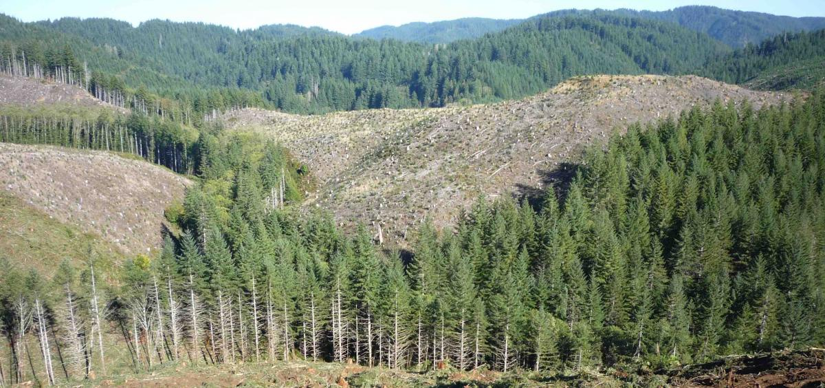 Harvested slopes in the Alsea River watershed