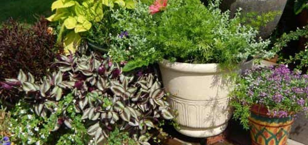 Adding gravel to the bottom of a plant container does not improve drainage.