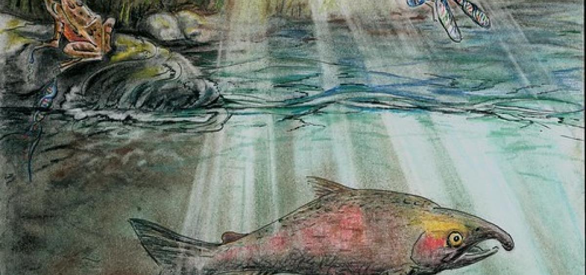 This illustration portrays the full picture of different species detected in a stream by analyzing environmental DNA. © Laura L. Hauck.