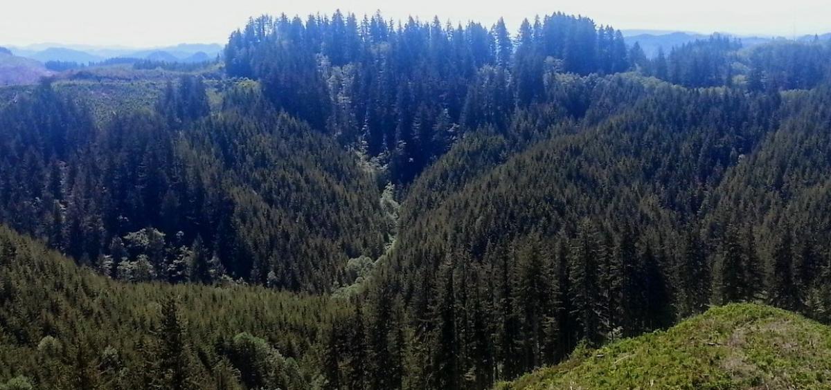Elliott forest