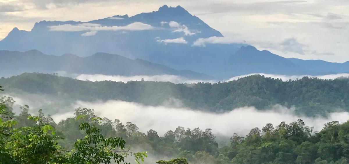 forest in Borneo