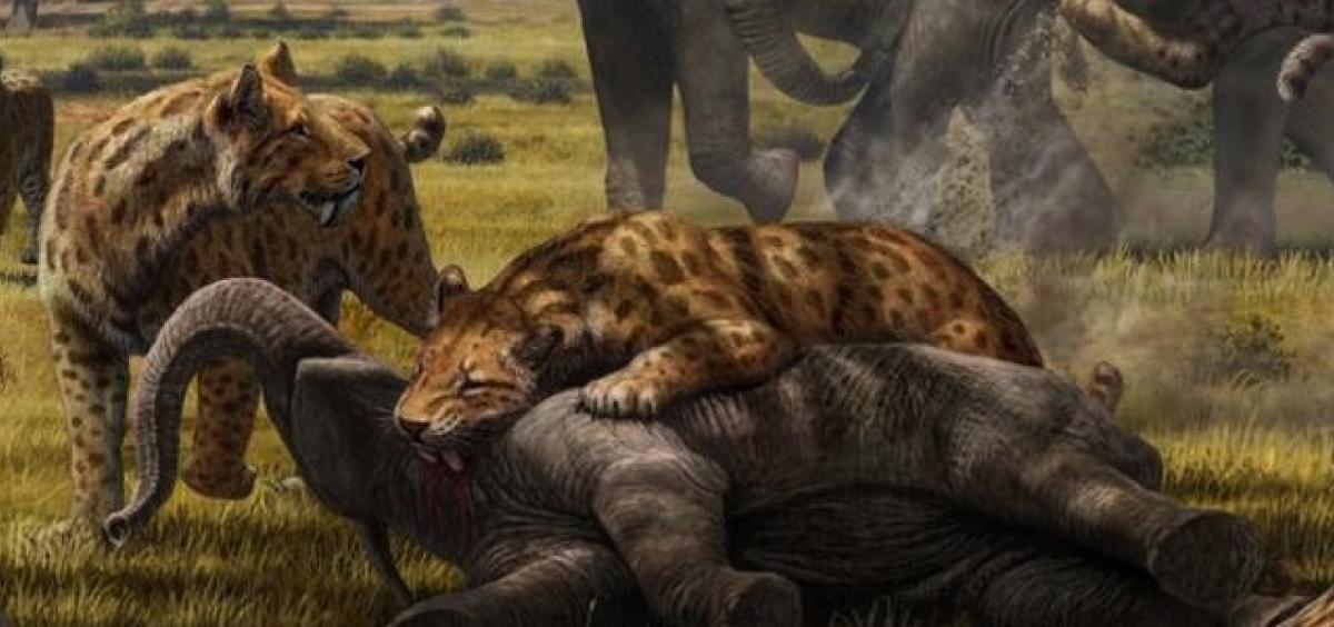 Prehistoric predators kept large animals in check, shaped ...