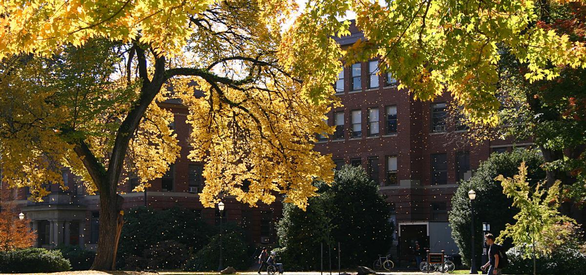 tree campus usa siu - 1200×564