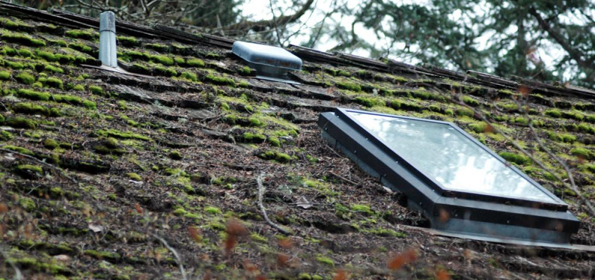 Maintaining A Moss Free Roof Takes Some Effort Oregon State