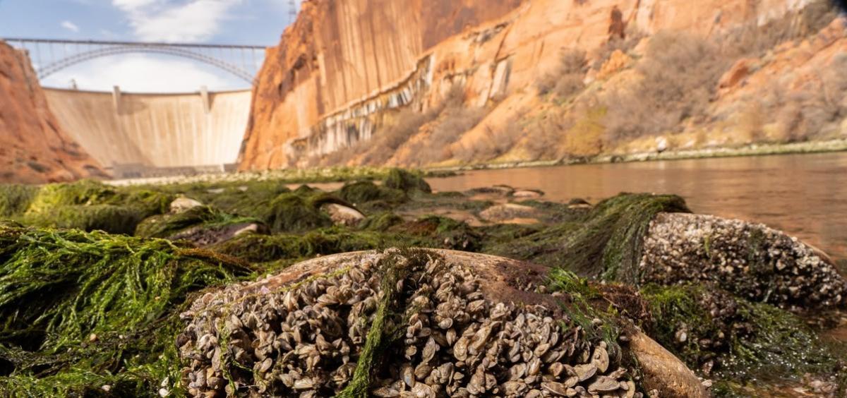 Glen Canyon photo by Jeremy Monroe, Freshwaters Illustrated/USGS