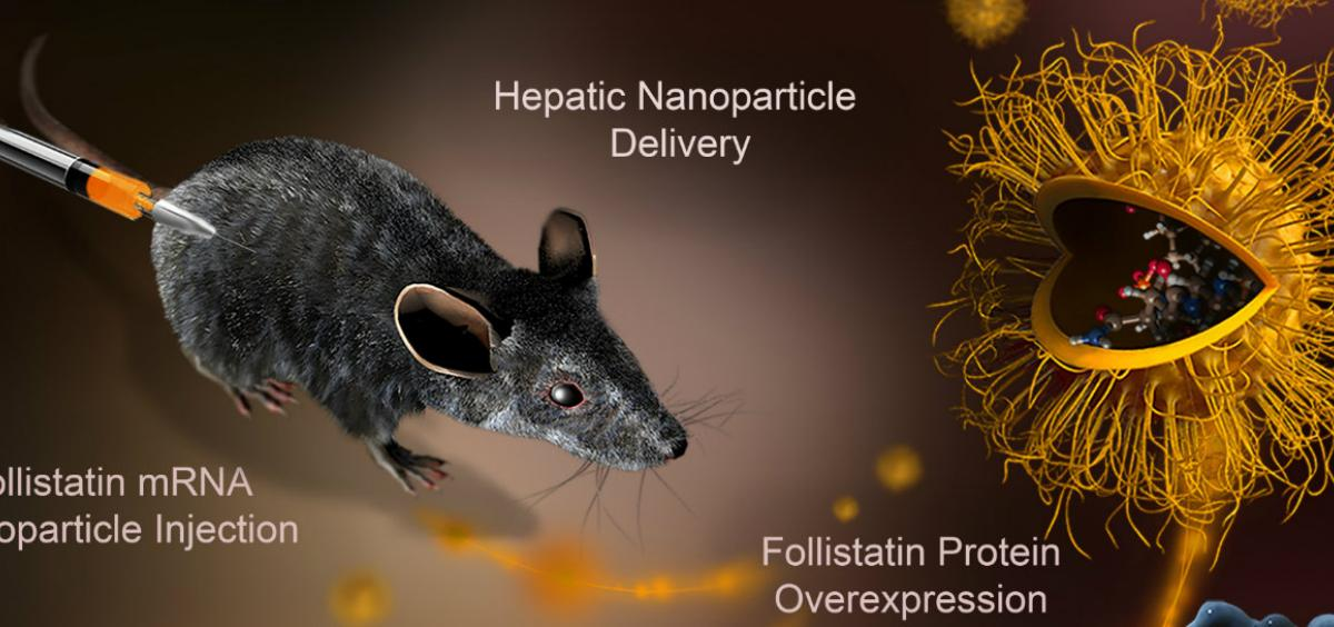 Nanotherapy graphic