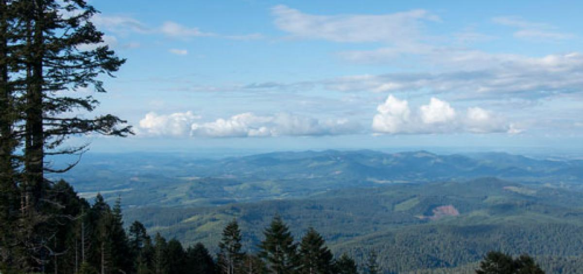 View of conifer forest from the top of Mary's Peak, the highest point on Oregon's Coast Range