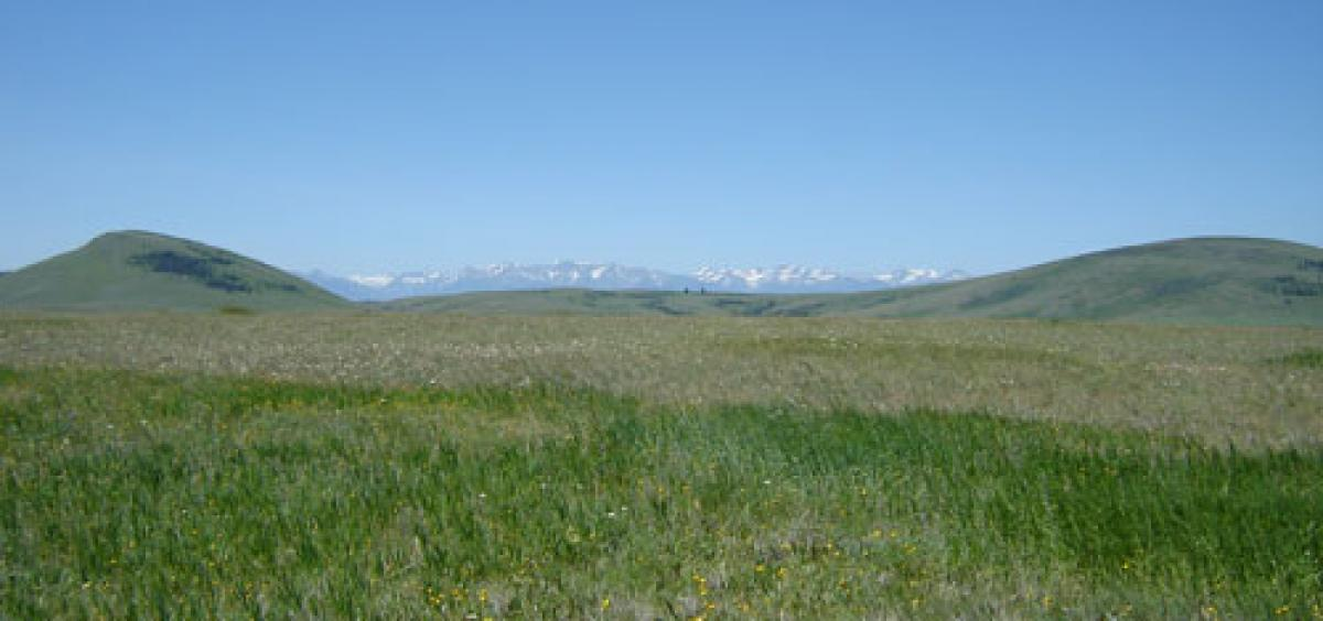 Zumwalt Prairie in northeastern Oregon has a mix of native and non-native plants