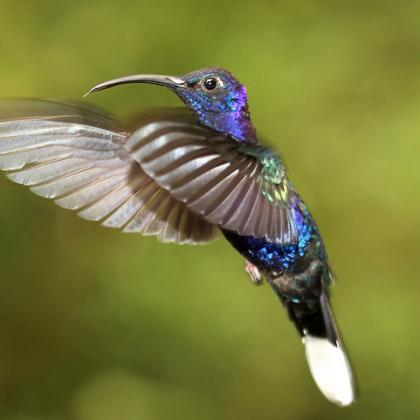 image of hummingbird