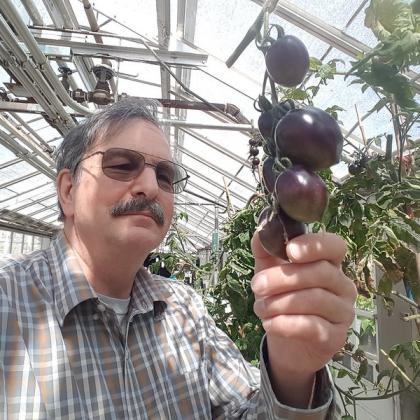 Jim Myers with Midnight Roma purple tomato. Photo by Jim Myers