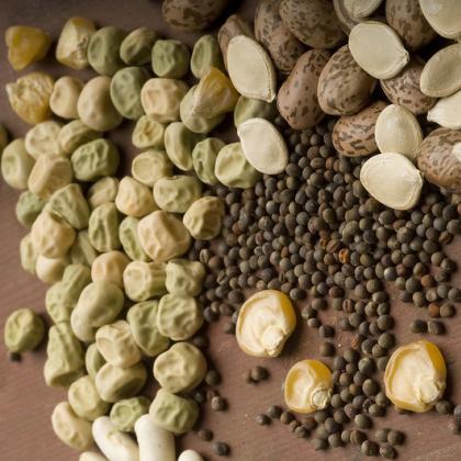 Saving seeds is a rewarding garden experience. Photo by Lynn Ketchum.