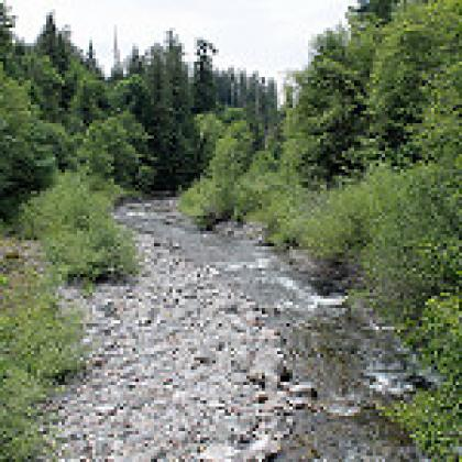 Lookout Creek in the H.J. Andrews Experimental Forest (Photo: Theresa Hogue)