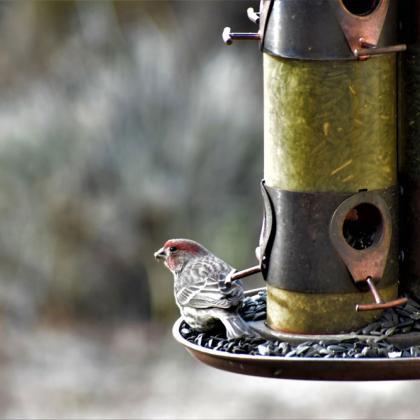 Bird at bird feeder