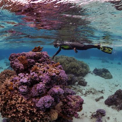 Rebecca Vega Thurber underwater