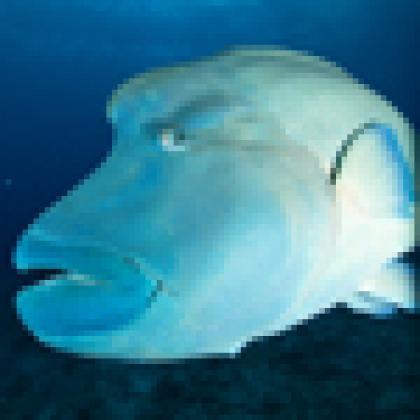Fish image photo by Richard Brooks