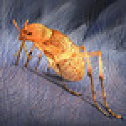 Ancient insect