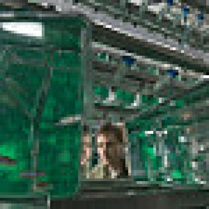 high tech zebrafish research