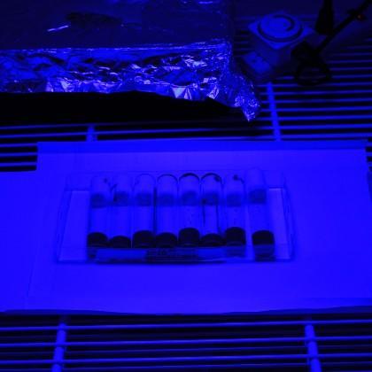 Flies under blue light