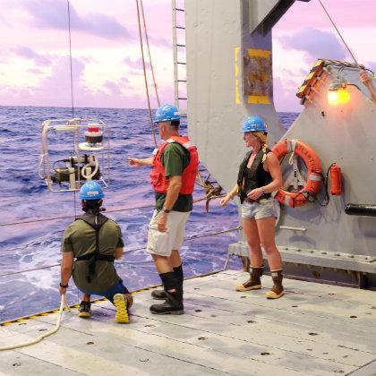 Sargasso Sea phytoplankton research