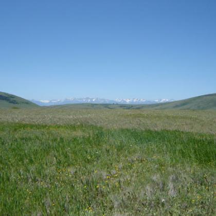 Zumwalt Prairie in northeastern Oregon has a mix of native and non-native plants
