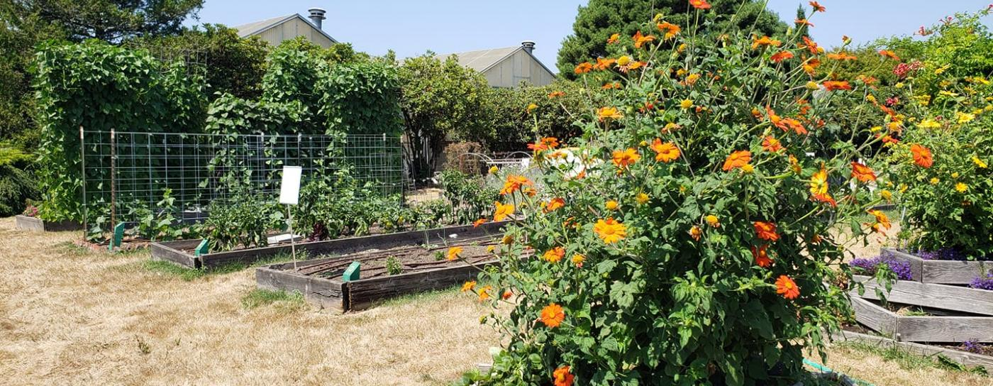 Multnomah County Master Gardener demonstration garden at Portland State University's Learning Garden Lab in Portland.