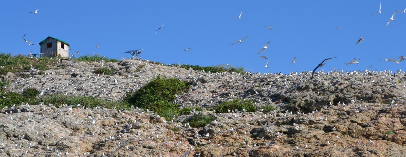 Tern colony by Simba Chan