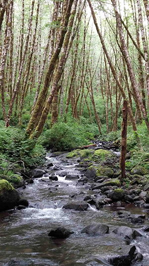 Headwater stream in the Trask watershed